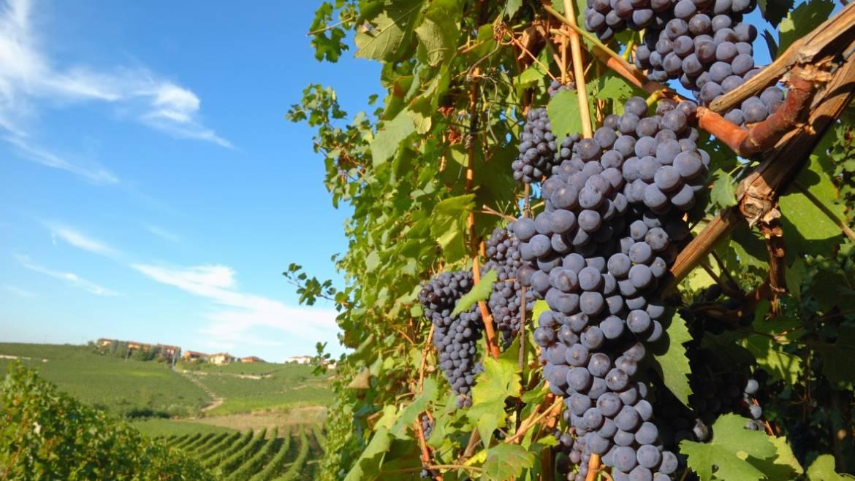 Primitivo di Puglia: la sua storia